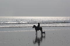 Woman on horse and dog on the beach Royalty Free Stock Images