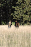 Woman and Horse in Field. Woman walking horse in field of tall prairie grass Royalty Free Stock Image