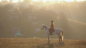 Woman on a horse outdoors female in the field. Slow motion. Side view. Woman on a horse outdoors female rider is on a horse in the field. Slow motion. Side view stock footage