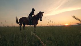 A woman on a horse outdoors. Female rider is on a horse in the field in the evening. Female rider is on a horse in the field in the evening stock video