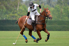 Woman horse polo player. Use a mallet hit ball in tournament stock photo