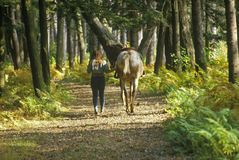 Woman with horse by the reins on trail in Autumn Royalty Free Stock Images