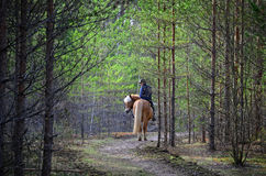 Woman and horse riding in forest Royalty Free Stock Images