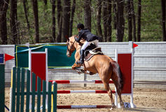 Woman on horse show jumping in special arena Stock Photos
