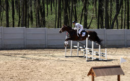 Woman on horse show jumping in special arena. And fence Royalty Free Stock Photos