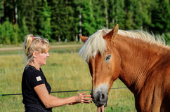 Woman and horse. Woman trying to feed medicin to horse Stock Photos