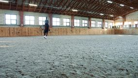 Woman on horse walking slowly on arena. Young woman sitting on horseback and riding on covered sandy arena having practice stock footage