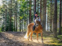 Woman horseback riding II Stock Photography