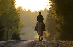 Woman horseback riding on road. At sunset Stock Images