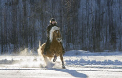 Woman horseback riding. In winter Stock Photography