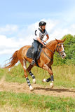 Woman horsebak on galloping red chestnut horse Stock Images