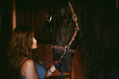 Woman horseman cleans from dirt with brush Friesian horse in stables on farm stock images