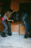 Woman horseman cleans from dirt with brush Friesian horse in stables on farm. Taking care of purebred pets royalty free stock photos