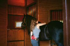 Woman horseman cleans from dirt with brush Friesian horse in stables on farm. Taking care of purebred pets stock image