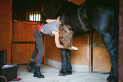 Woman horseman cleans from dirt with brush Friesian horse in stables on farm. Taking care of purebred pets royalty free stock photography