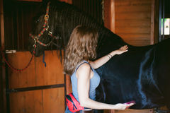 Woman horseman cleans from dirt with brush Friesian horse in stables on farm. Taking care of purebred pets royalty free stock image