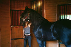 Woman horseman cleans from dirt with brush Friesian horse in stables on farm. Taking care of purebred pets stock images
