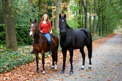 Woman horses avenue lane forrest royalty free stock photography