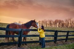 Woman with horses stock photos