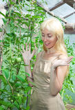 Woman in hothouse rejoices to the future tomatoes Royalty Free Stock Image