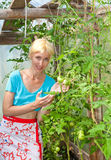 Woman in a hothouse rejoices to the tomatoes Royalty Free Stock Photos