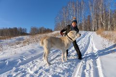 Woman is hugging a Central Asian Shepherd on a winter rural road amid a birch grove stock image