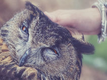Woman hugging a owl Stock Images