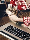 Woman hugging and petting cute cat and holding laptop in room in Royalty Free Stock Photography