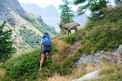 Woman and ibex Stock Photo