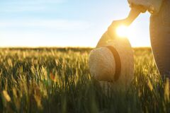 Free Woman In Field With Unripe Spikes On Sunny Day Royalty Free Stock Photography - 185852857