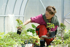 Woman In The Greenhouse Royalty Free Stock Image