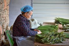 ANHUI PROVINCE, CHINA – CIRCA OCTOBER 2017: woman working inside a tea factory. A woman inside a tea factory during the process of preparing bamboo stock image