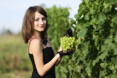 Woman inspecting grapes in a vineyard Stock Photography