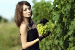 Woman inspecting grapes in a vineyard Stock Photo