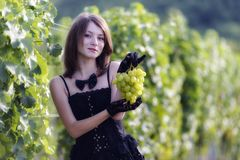 Woman inspecting grapes in a vineyard Stock Images