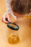 Woman inspecting honey with magnifying glass. Stock Photo
