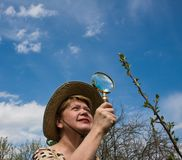 A woman inspects cherry branch Stock Photography