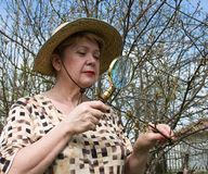 A woman inspects cherry branch Royalty Free Stock Images