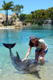 Woman interact with Dolphin Royalty Free Stock Photos