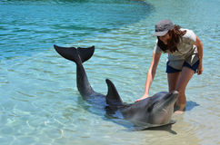 Woman interact with Dolphin Stock Image