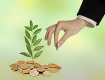 Investing to green business. Woman Investing to green business Royalty Free Stock Photo