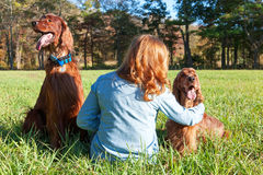 Woman with Irish Setter dogs Stock Photo