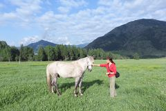 Woman ironing a horse in a meadow among the mountains. Altai, Russia Royalty Free Stock Photos