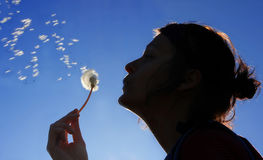 Woman Is Blowing To The Dandelion Stock Images