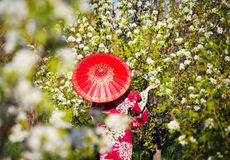 Woman in Japan costume at cherry blossom Royalty Free Stock Photo
