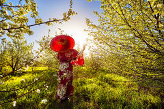 Woman in Japan costume at cherry blossom Royalty Free Stock Image