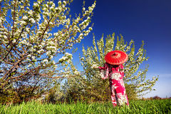 Woman in Japan costume at cherry blossom Stock Photo