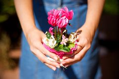 Woman in jean dress holding pink sowbread Stock Photo