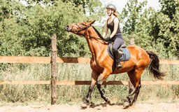 Woman jockey training riding horse. Sport activity Royalty Free Stock Photos