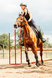 Woman jockey training riding horse. Sport activity Royalty Free Stock Photography
